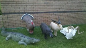 3D Archery Targets. Alligator, Turkey, Pig and two goats